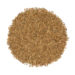 Caraway Whole Seeds | Burma Spice