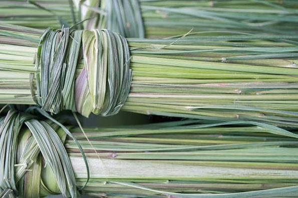 Dried Lemongrass bunched together