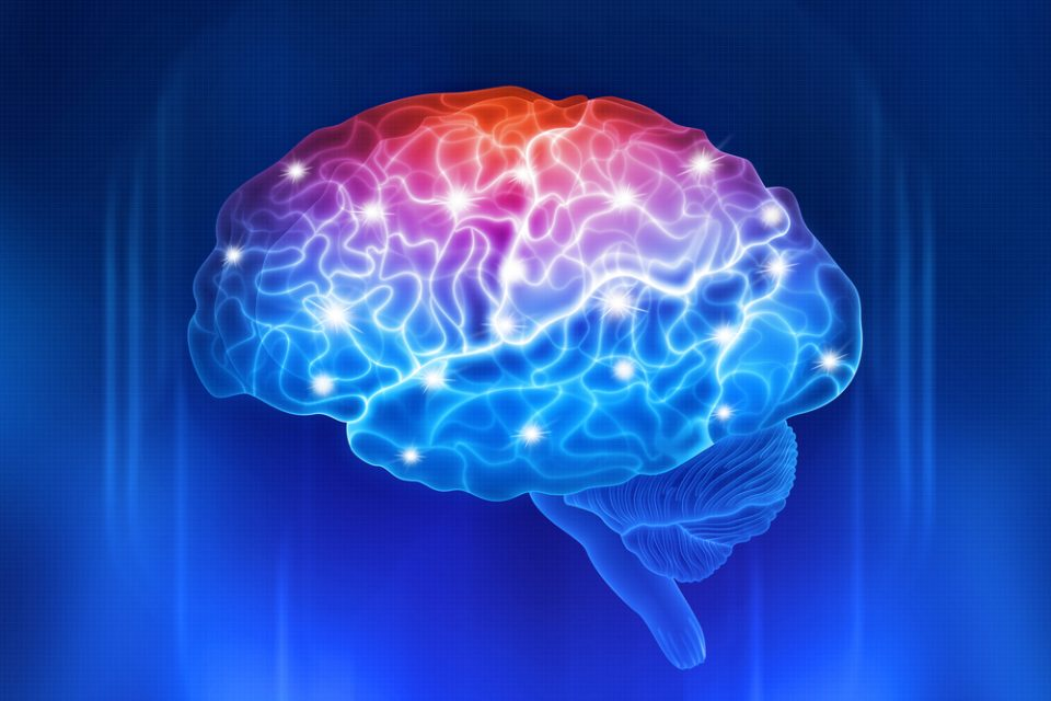 Brain activity | The Biology of taste